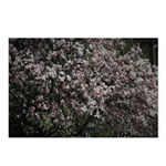 Magnolia Tree Postcards (Package of 8)