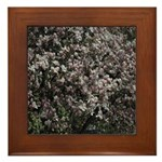 Magnolia Tree Framed Tile