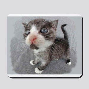 Gray Kitten Mousepad
