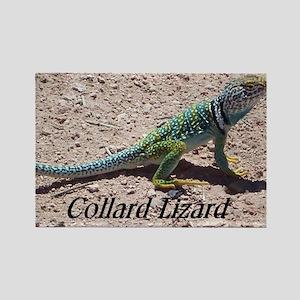 Collard Lizard Rectangle Magnet