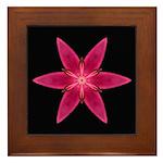 Pink Lily I Framed Tile