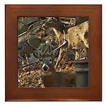 Oshkosh Deer Framed Tile