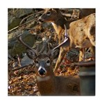 Oshkosh Deer Ceramic Tiles & Coasters Tile Coa