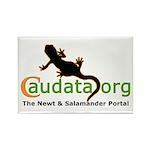 Official Caudata.org Rectangular Magnet