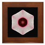 Hibiscus II Framed Tile