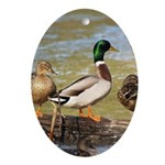 Mallard Ducks Ornament (Oval)