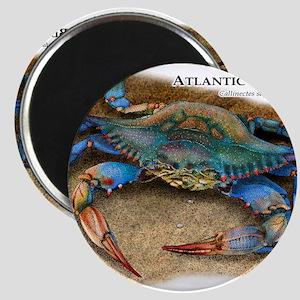 Atlantic Blue Crab Magnets