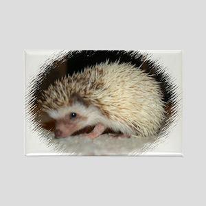 Pretty Pinto Hedgehog Rectangle Magnet