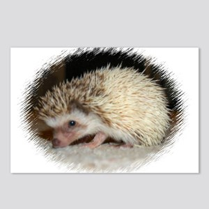 Pretty Pinto Hedgehog Postcards (Package of 8)
