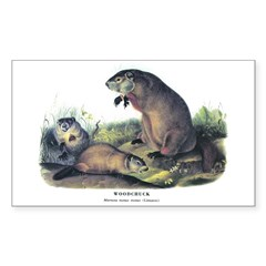 Audubon Woodchuck Groundhog Rectangle Decal