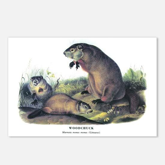 Audubon Woodchuck Groundhog Postcards (Package of