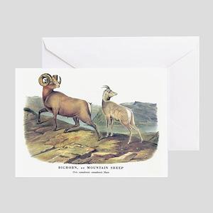 Audubon Bighorn Sheep Greeting Card
