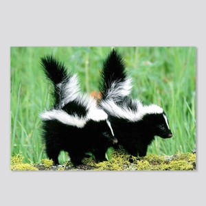 Two Skunks Postcards (Package of 8)