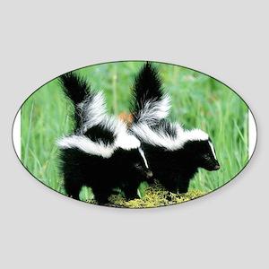Two Skunks Oval Sticker