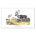 Audubon Caribou Reindeer Animal Rectangle Sticker