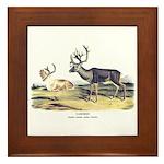 Audubon Caribou Reindeer Animal Framed Tile