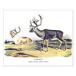 Audubon Caribou Reindeer Animal Small Poster
