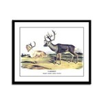 Audubon Caribou Reindeer Animal Framed Panel Print