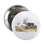 Audubon Caribou Reindeer Animal 2.25