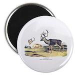 Audubon Caribou Reindeer Animal Magnet