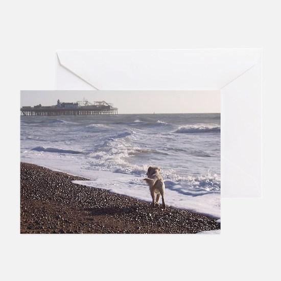 Dog on Brighton Beach Greeting Cards (Pk of 10)