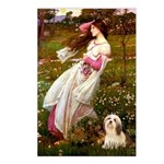 Windflowers / Lhasa Apso #4 Postcards (Package of