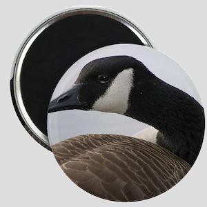 Canadian Goose Magnet