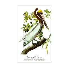 Audubon's Brown Pelican Sticker (Rectangle)