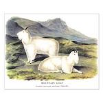Audubon Mountain Goat Animal Small Poster