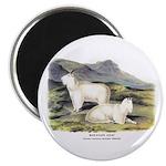 Audubon Mountain Goat Animal Magnet