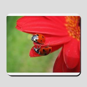Ladybug Love Mousepad