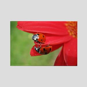 Ladybug Love magnet