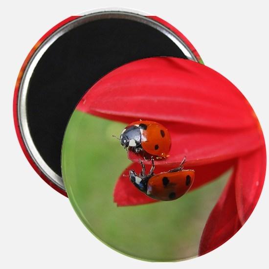 Ladybug Love round magnet