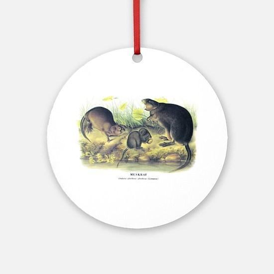 Audubon Muskrat Animal Ornament (Round)