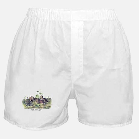 Audubon Gopher Animal Boxer Shorts