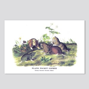 Audubon Gopher Animal Postcards (Package of 8)