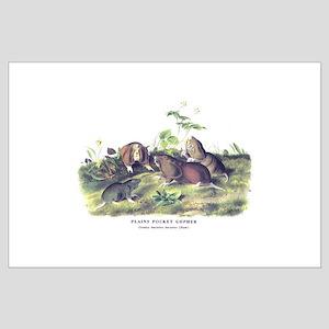Audubon Gopher Animal Large Poster