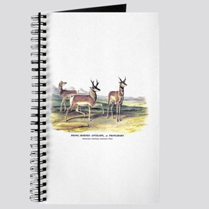 Audubon Pronghorn Antelope Journal