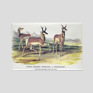 Audubon Pronghorn Antelope Rectangle Magnet