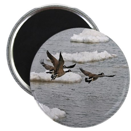 Flying Canadian Geese Magnet