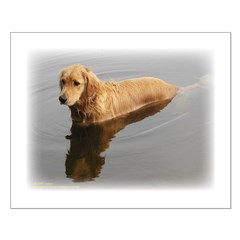 Wet Golden Retriever Posters
