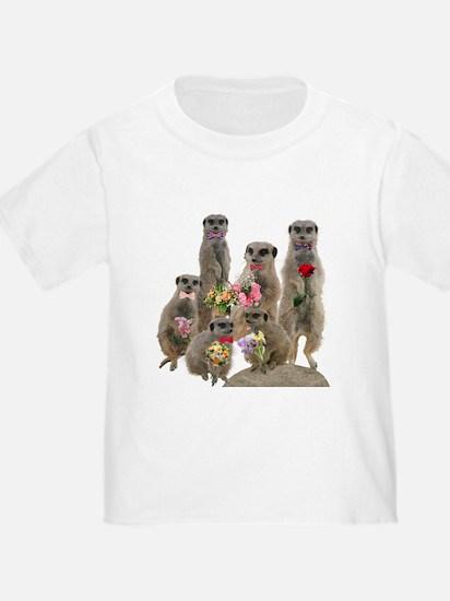 Meerkat T