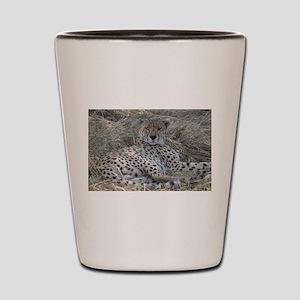 Cheetah 1 Shot Glass