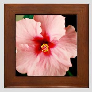 Pink Hibiscus - Framed Tile