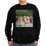 Elk at Prairie Creek Redwoods Sweatshirt