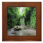 Fern Canyon Framed Tile