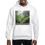 Fern Canyon Redwoods Sweatshirt