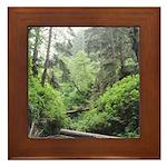Fern Canyon Redwoods Framed Tile
