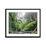 Fern Canyon Redwoods Framed Panel Print