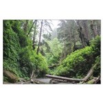 Fern Canyon Redwoods Posters Large Poster